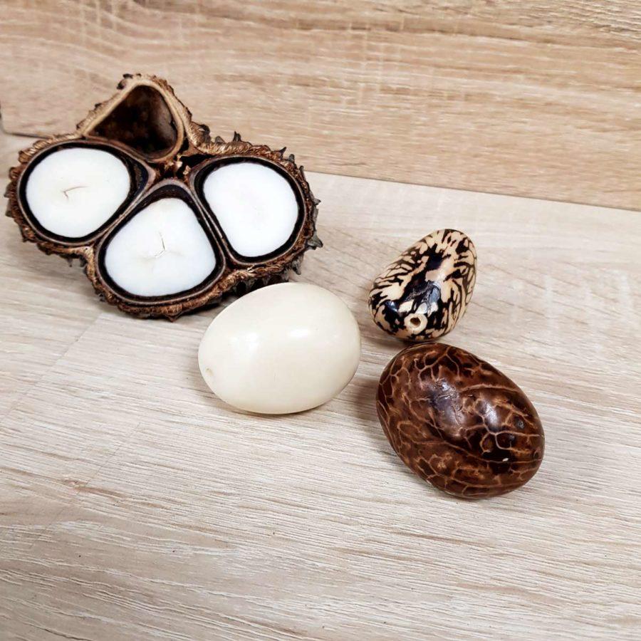 noix de tagua ivoire végétal
